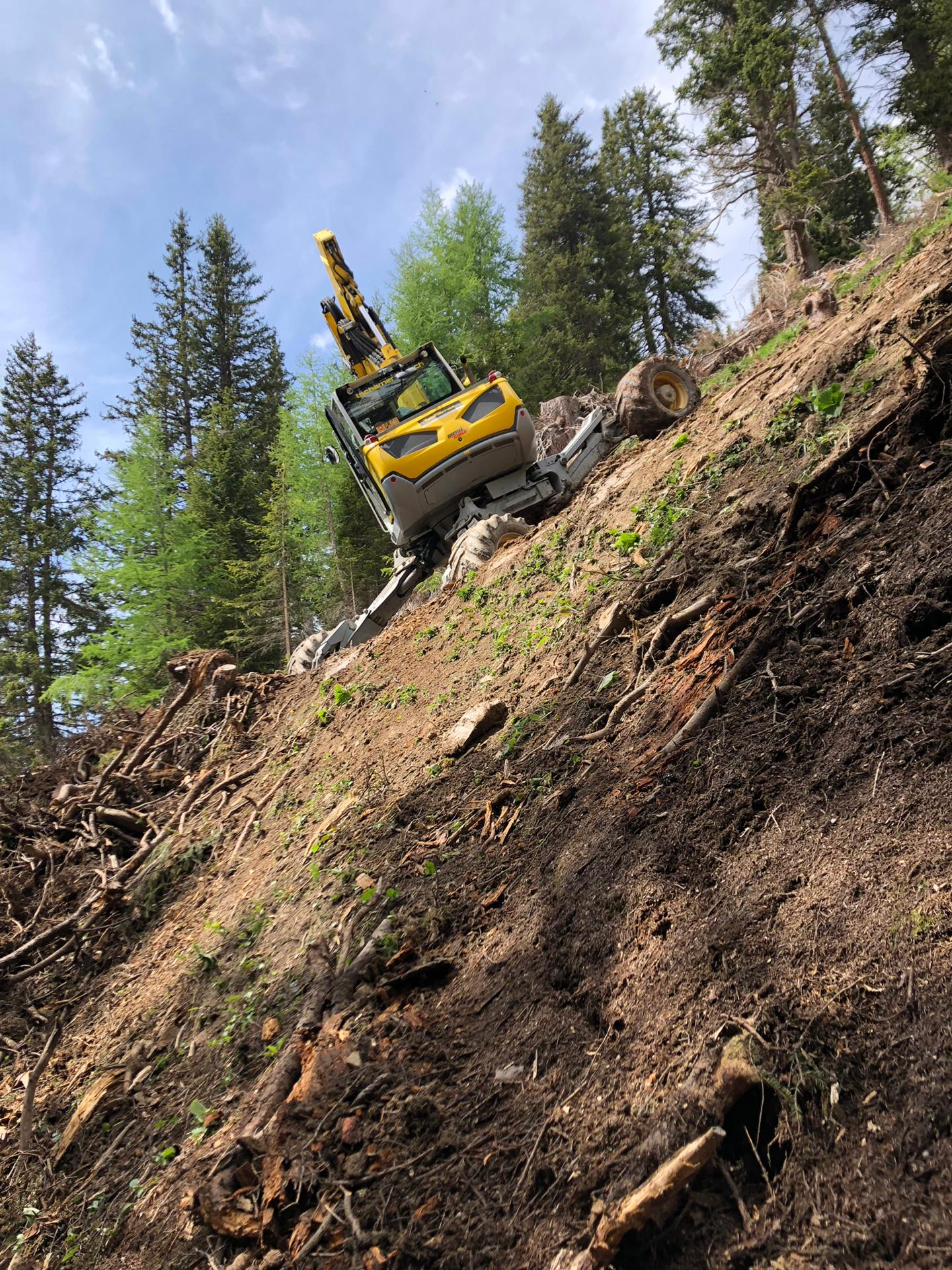Holzschlagräumung Trans